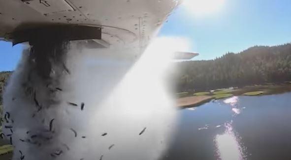 طائرة تلقي 35 ألف سمكة في بحيرة أمريكية