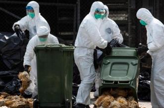 وباء خطير يظهر في أوروبا بعد 40 عامًا من اختفائه - المواطن