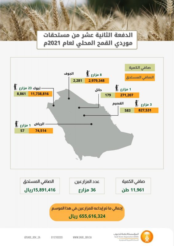 الحبوب تبدأ صرف مستحقات الدفعة لـ12 لمزارعي القمح - المواطن