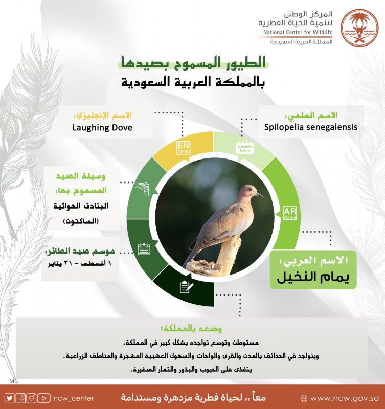 هذه الطيور يمكن صيدها في السعودية والترخيص عبر منصة فطري - المواطن