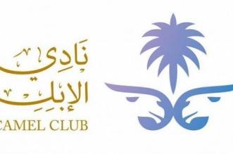 مؤتمر دولي لـ الإبل في السعودية للاستفادة من منتجاتها - المواطن