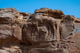 المملكة في ميزان الحضارة.. موقع الجمل الأثري بالجوف أقدم نحت في العالم - المواطن