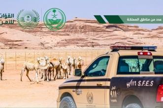 توقيف 28 مخالفًا لنظام البيئة لارتكابهم مخالفات رعي بعدة مناطق - المواطن