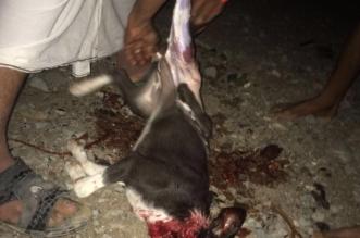 """مصادر """"المواطن"""" تكشف حقيقة مندي الكلاب بمكة المكرمة - المواطن"""