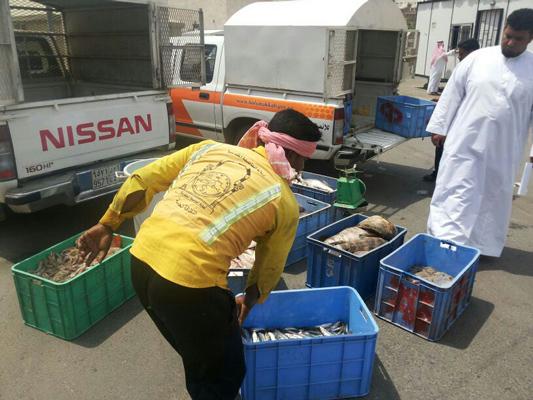 """إتلاف 3.5 طن سمك فاسد وإغلاق 5 محلات بـ"""" مسفلة مكة"""" - المواطن"""