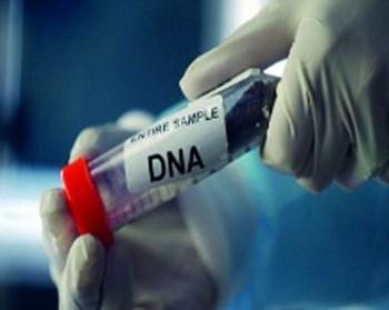 """محكمة أردنية تلجأ إلى """"DNA"""" للتعرف على والد جنين سورية تزوجت 4 - المواطن"""