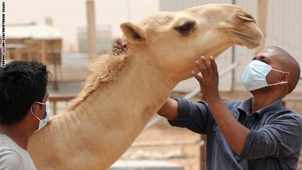 SAUDI-HEALTH-MERS-VIRUS-CAMELS