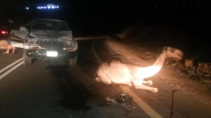 نجاة سائق من موت محقق لاصطدامه بقطيع إبل بهروب #جازان6