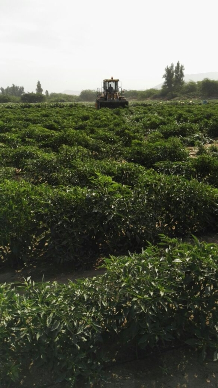 ملتقى التنمية الزراعية بعسير يقر 14 توصية أبرزها: تمويل البحث العلمي