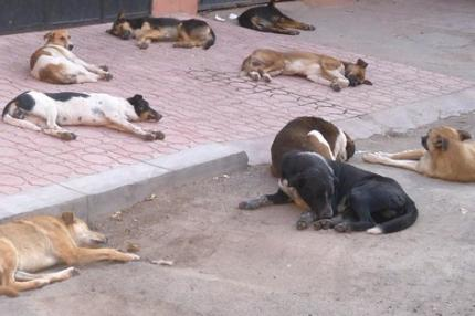 البلدية تتبرأ من #تسميم_الكلاب_الضالة .. وتؤكد: الفتاوى أجازت لنا ذلك