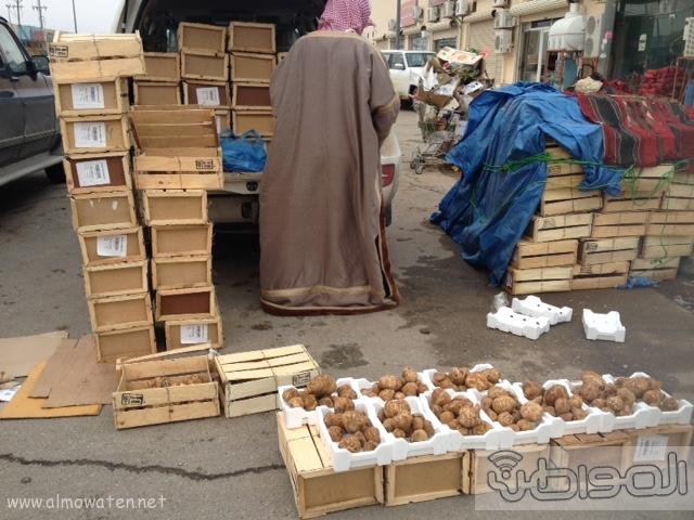 الكمأ المغربي يغزو أسواق رفحاء 8