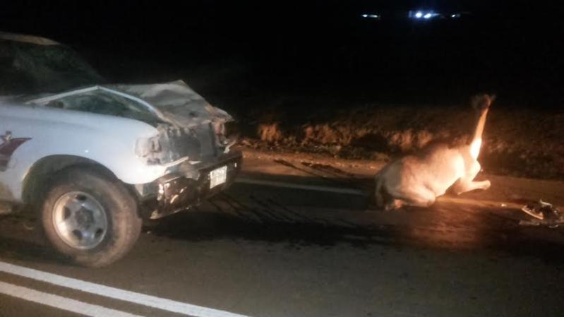 نجاة سائق من موت محقق لاصطدامه بقطيع إبل بهروب #جازان8