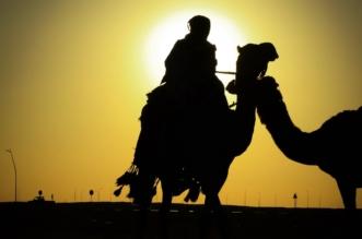 إدارة مهرجان الملك عبدالعزيز للإبل تسلم الفائزين في فئة الفردي جوائزهم - المواطن
