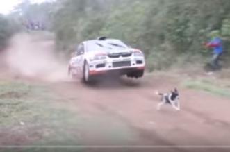 بالفيديو.. براعة قائد سيارة سباق تنقذ كلبًا في المضمار - المواطن