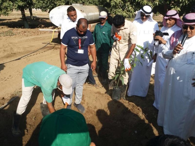 بالصور.. انطلاق فعاليات يوم الحقل في جازان بشعار خدمة ورعاية أشجار المانجو - المواطن