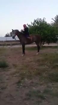 بالفيديو.. ضارب الحصان لمنتقديه: أزعجتونا - المواطن