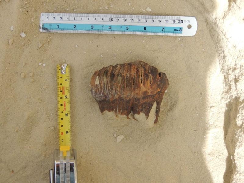 بالصور.. اكتشاف بقايا فيل صغير بصحراء النفود - المواطن