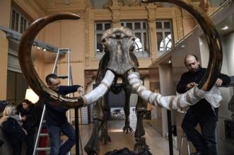 شاهد.. 548 ألف يورو ثمن هيكل فيل! - المواطن