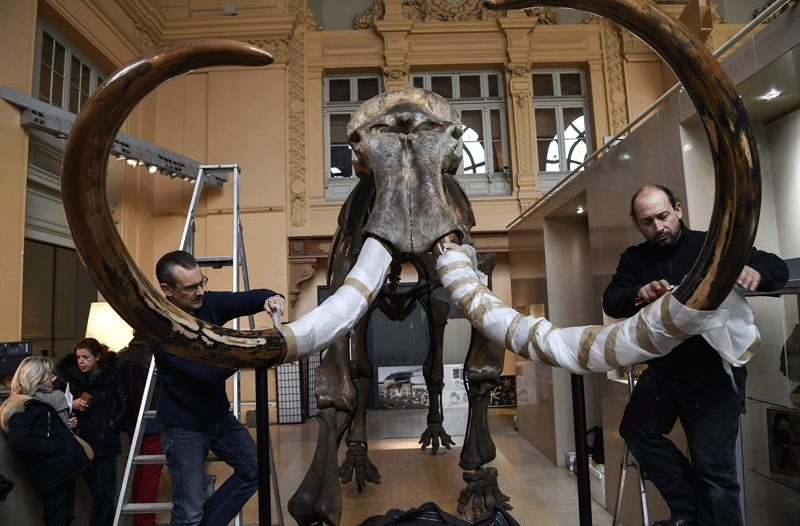شاهد.. 548 ألف يورو  ثمن هيكل فيل!