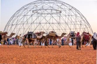 الصياهد تَشْرَعُ فضاءاتها في متنزّه تعاليل البريّ لزوّار مهرجان الملك عبدالعزيز للإبل - المواطن