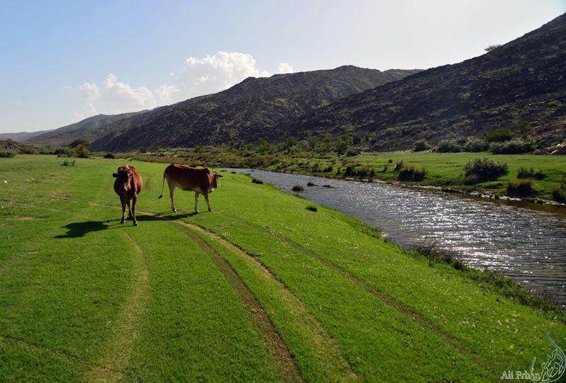 وادي ترجس - تنومة