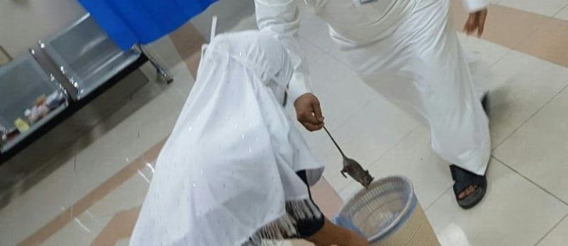 فئران مستشفى ابوعريش