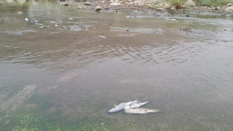 مقتل الأسماك جراء المبيدات في وادي العرج