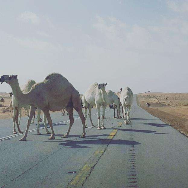 """""""المواطن"""" على طريق الرين.. 8 سلبيات ومطالب عاجلة بالتدخل!"""