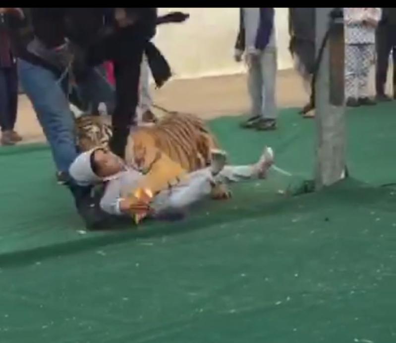 نمر يهجم على فتاة