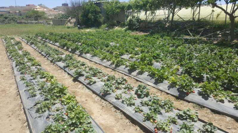 التنمية الزراعية يعتمد تمويل مشاريع بأكثر من 320 مليون ريال