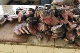 مصادرة أسماك فاسدة في سوق السمك بمكة المكرمة - المواطن