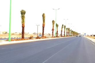 بالصور.. زراعة أكثر من 700 نخلة في شوارع أحد المسارحة الرئيسية - المواطن