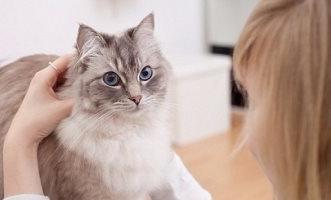 انتبه.. تربية القطط تُعرضك لهذه الأمراض الخطيرة - المواطن