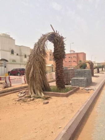 """بالصور.. أرصفة متناثرة وأشجار تالفة تشوِّه مشروع تزيين """"إسكان الرياض"""" - المواطن"""