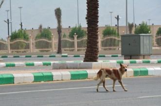 إيقاف مكافحة الكلاب الضالة بالسم وفريق عمل للبحث عن حلول - المواطن