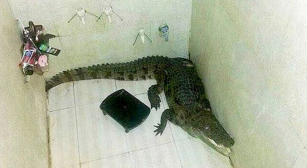 Man-Shocked-to-Find-a-Crocodile-in-His-Shower