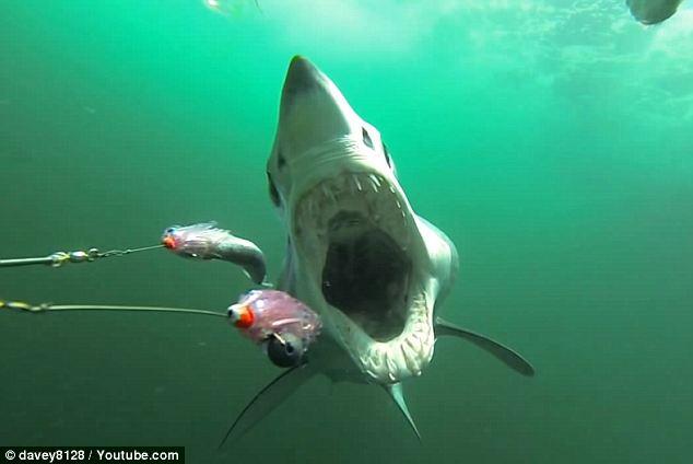 شاهِد كيف يبدو سمك القرش تحت السفن في المحيط الأطلسي - المواطن