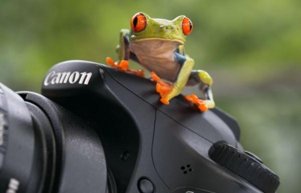 بالصور.. ضفدع يداعب كاميرا مصور إسباني
