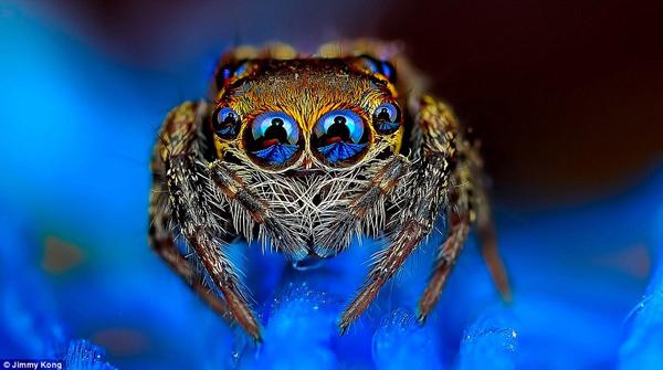 بالصور.. العناكب كما لم ترها من قبل - المواطن