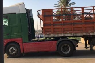 ضبط شاحنة حمير في جدة والتحفظ على قائدها - المواطن