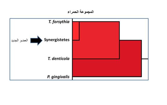 بكتيريا جديدة ضمن المجموعة الحمراء المرتبطة بالتهابات اللثة - المواطن