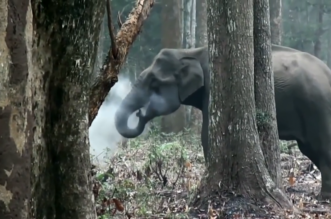 بالفيديو.. أول فيل مدخن في التاريخ يثير حيرة العلماء - المواطن